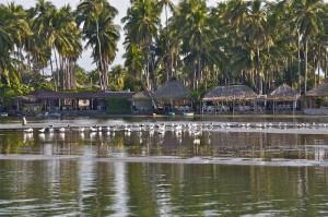 Az's laguna birds 8