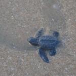KA's wet turtle2