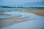 egret at boca